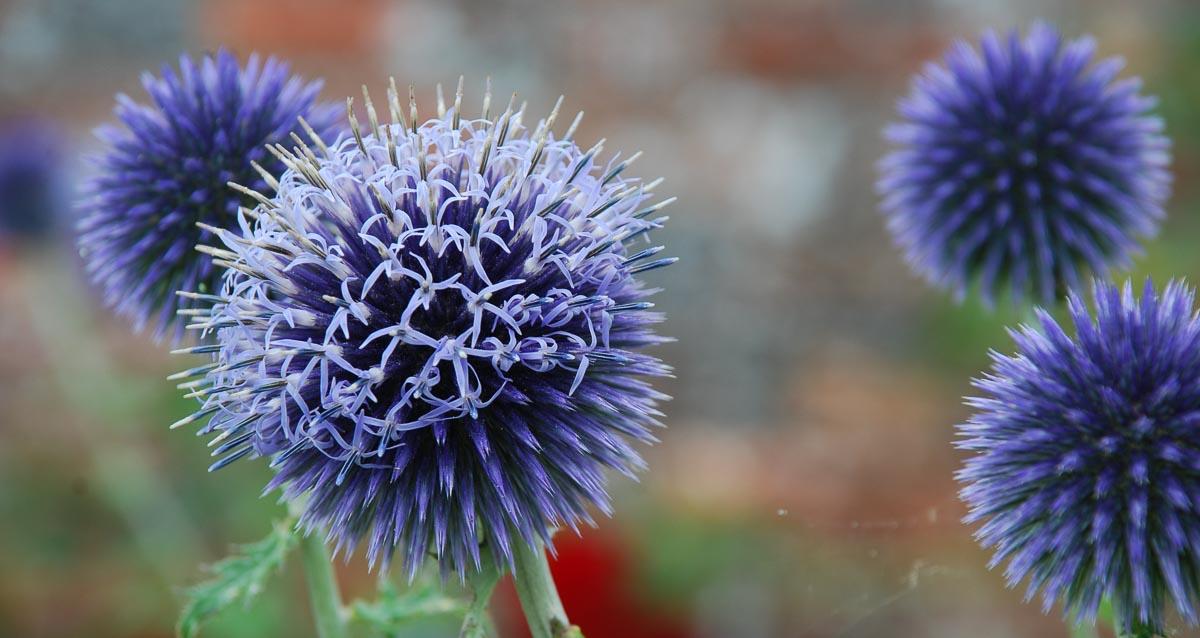 Heininger Gartenbau - Blume